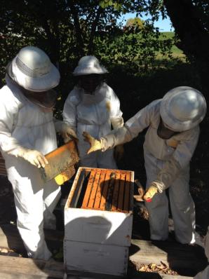 mariana bees